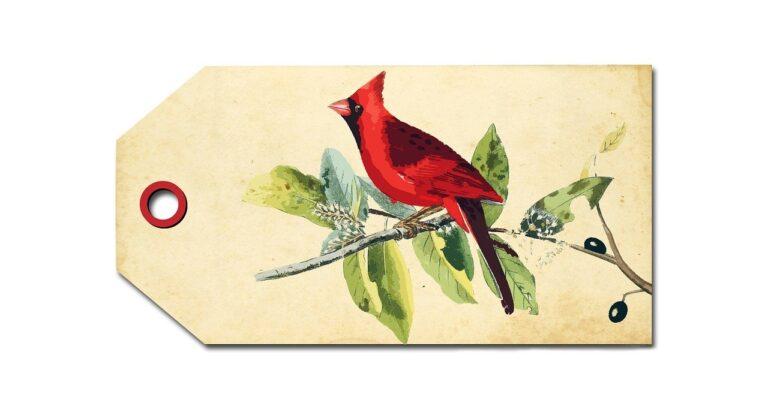 bird, cardinal, red
